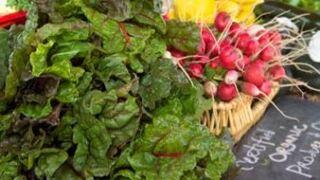 Holland Farmers Market produce.JPG