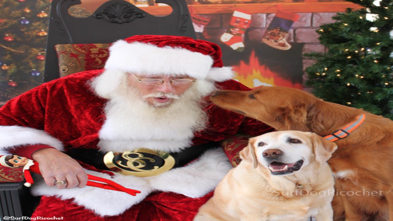 Dogs vs. elf prank war is EPIC