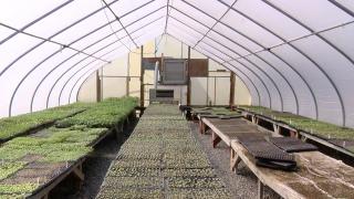 Greg's U-Pick Greenhouse