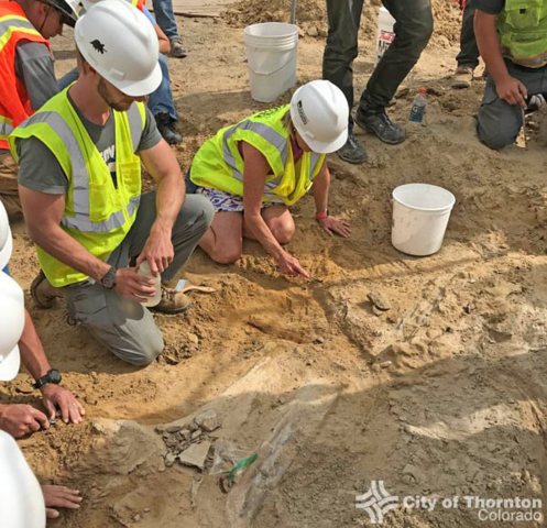 See photos from the rare discovery of a dinosaur skull in Thornton