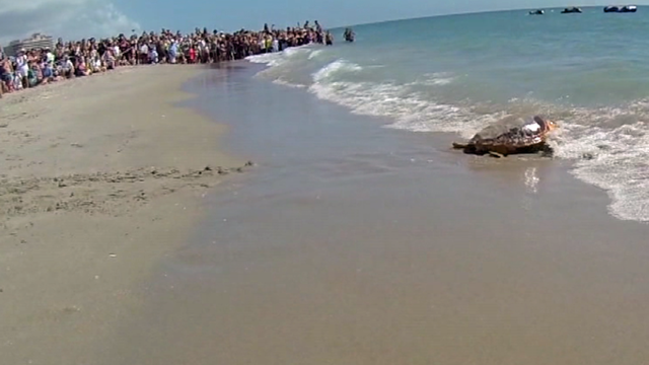 Two loggerhead turtles released