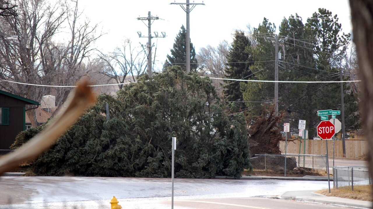 Security tree uprooted on January 9, 2017 Cecilia Lizama Sellers
