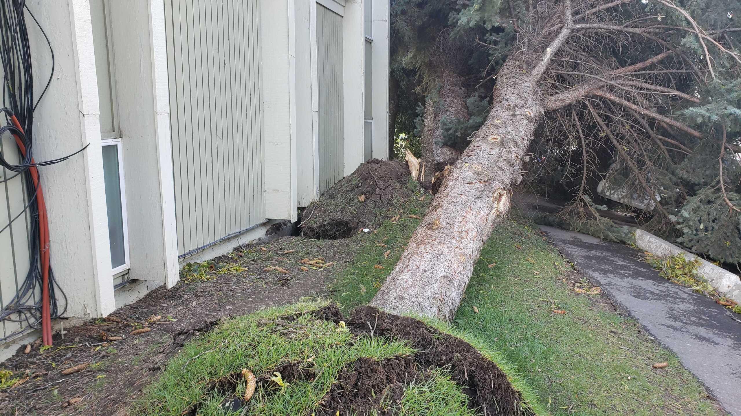 Wind Damage in Ogden (14).jpg