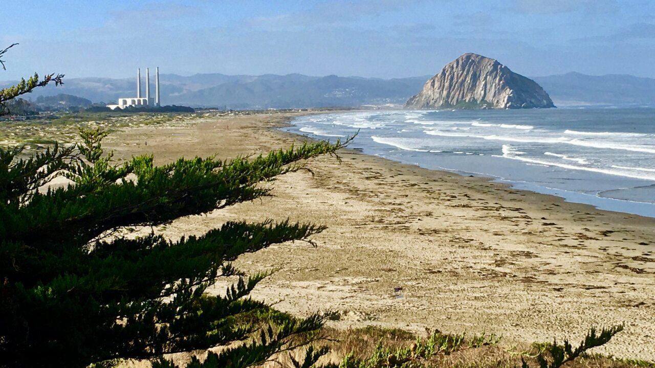 Morro Bay with tree foreground