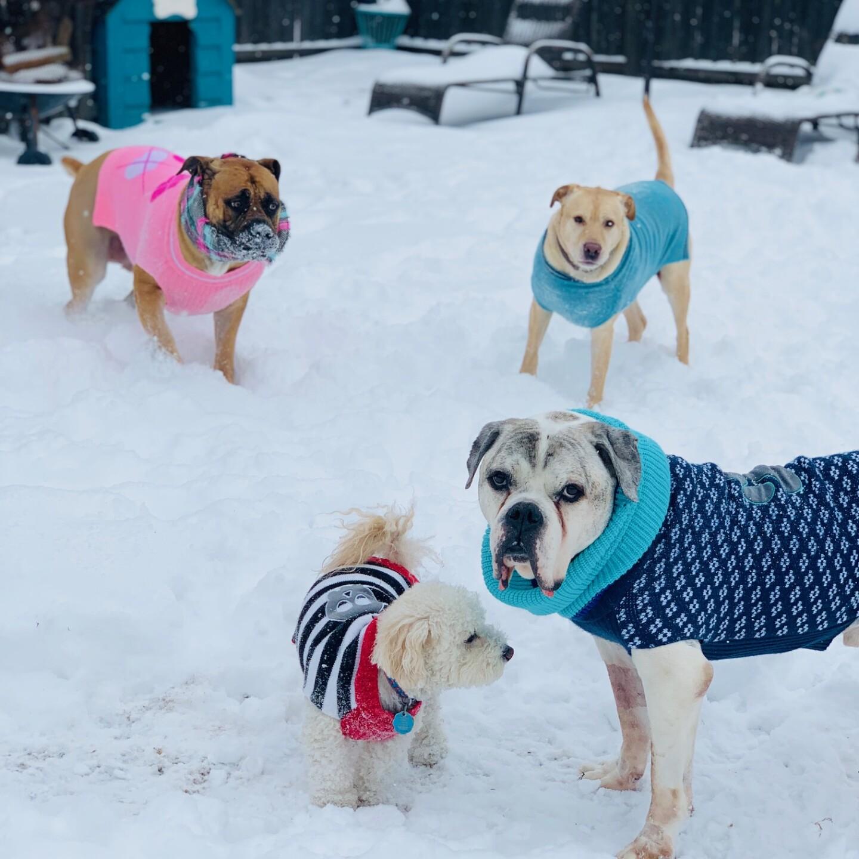 snow pups 6.jpg