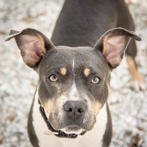 PHOTOS: 20+ adoptable pets in the Tampa Bay area for the weekend of August 31