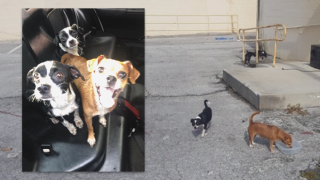 dumped-dogs-st-pete.png