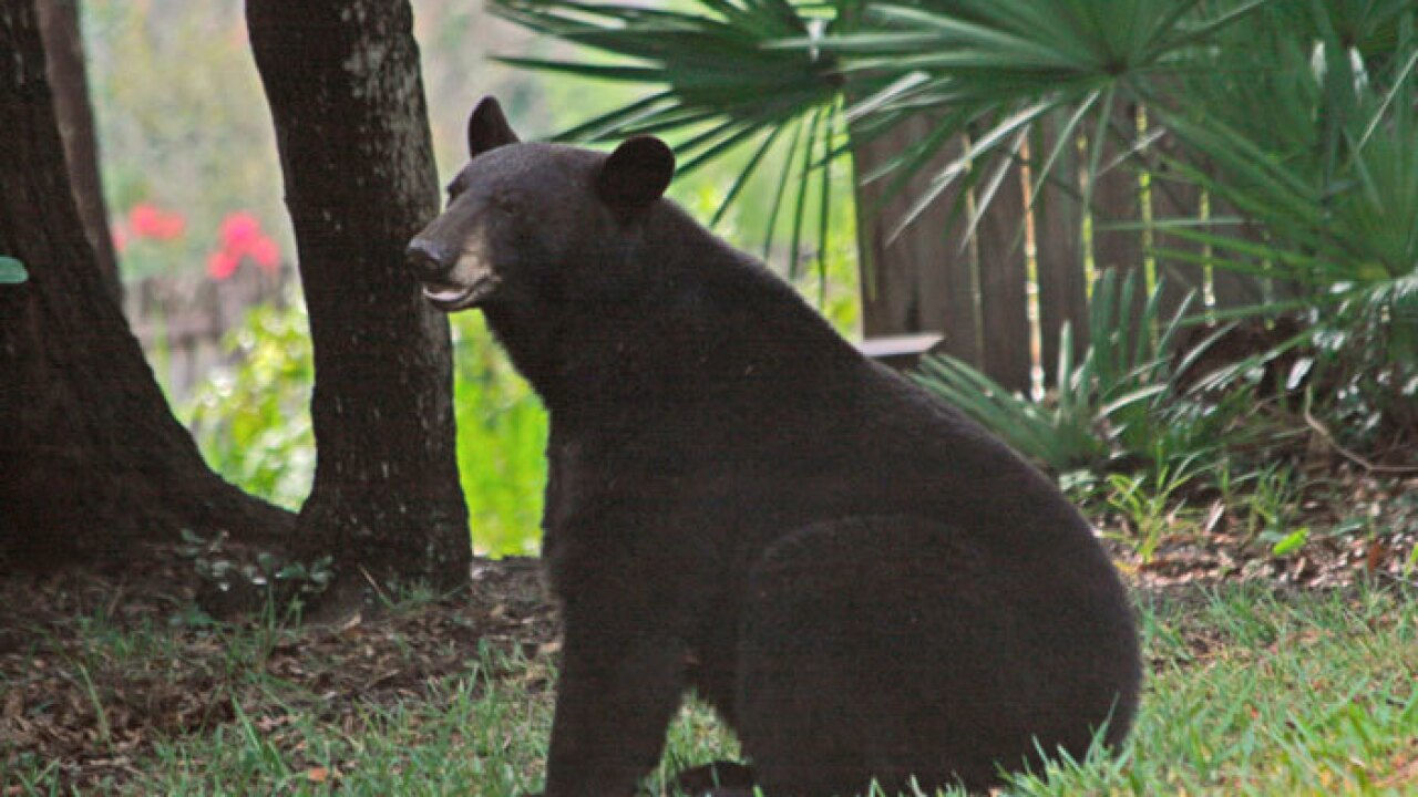 longwood-bear-fwc_original.jpg