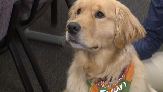 St. Xavier High School therapy dog Evan
