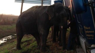 Photos: Sheriff's deputies shocked to find elephants holding up tipped 18-wheeler