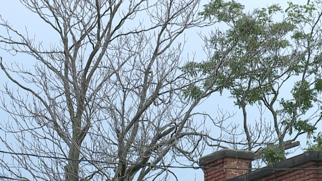 CLE sparse tree canopy raises health concerns and stepped-up recovery plan