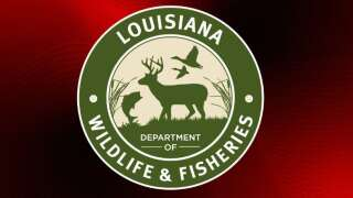 Four cited in St. Mary Parish for alleged crabbing violations