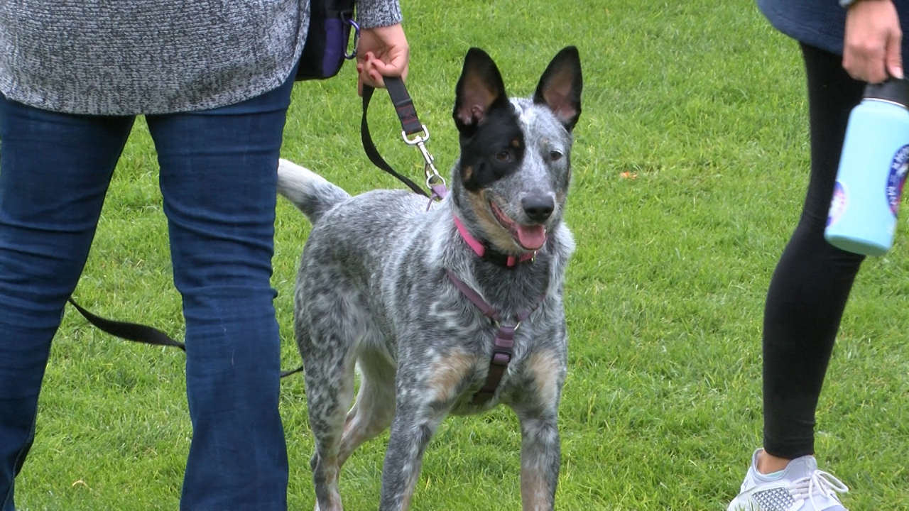 Annual Blessing of the Pets at Carroll College