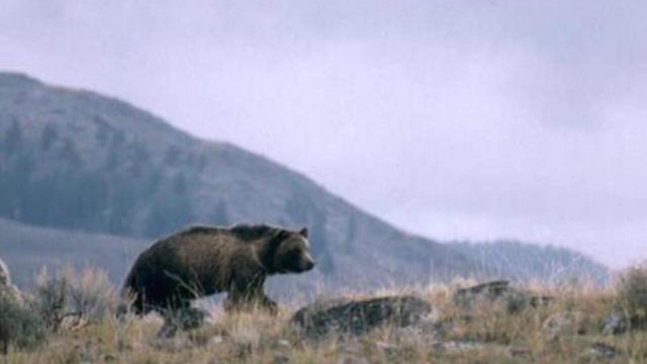 Man mauled by bear in national park