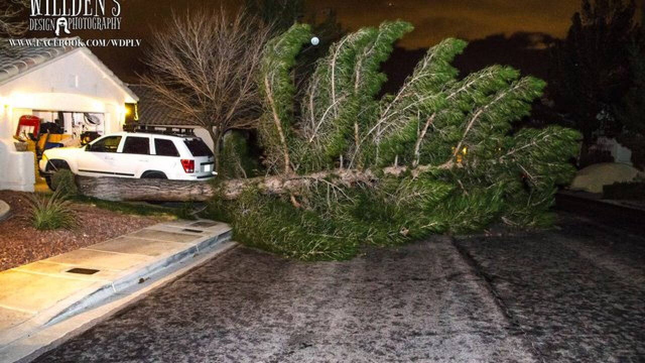 Windy conditions bring down tree in Summerlin