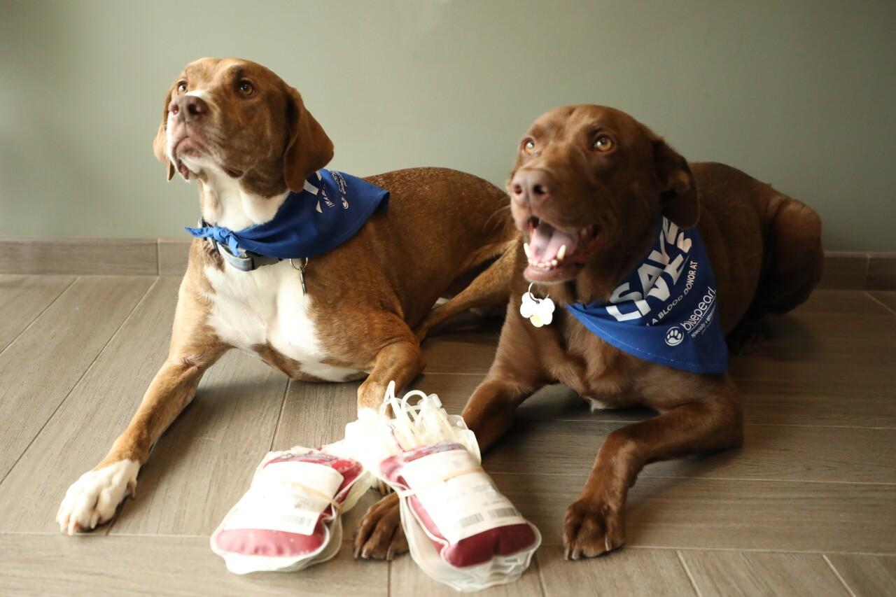 Dog Donors2.jpg