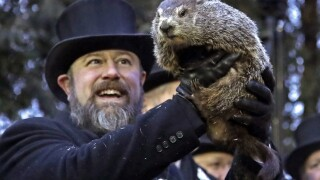 Punxsutawney Phil predicts early spring for Groundhog Day 2020
