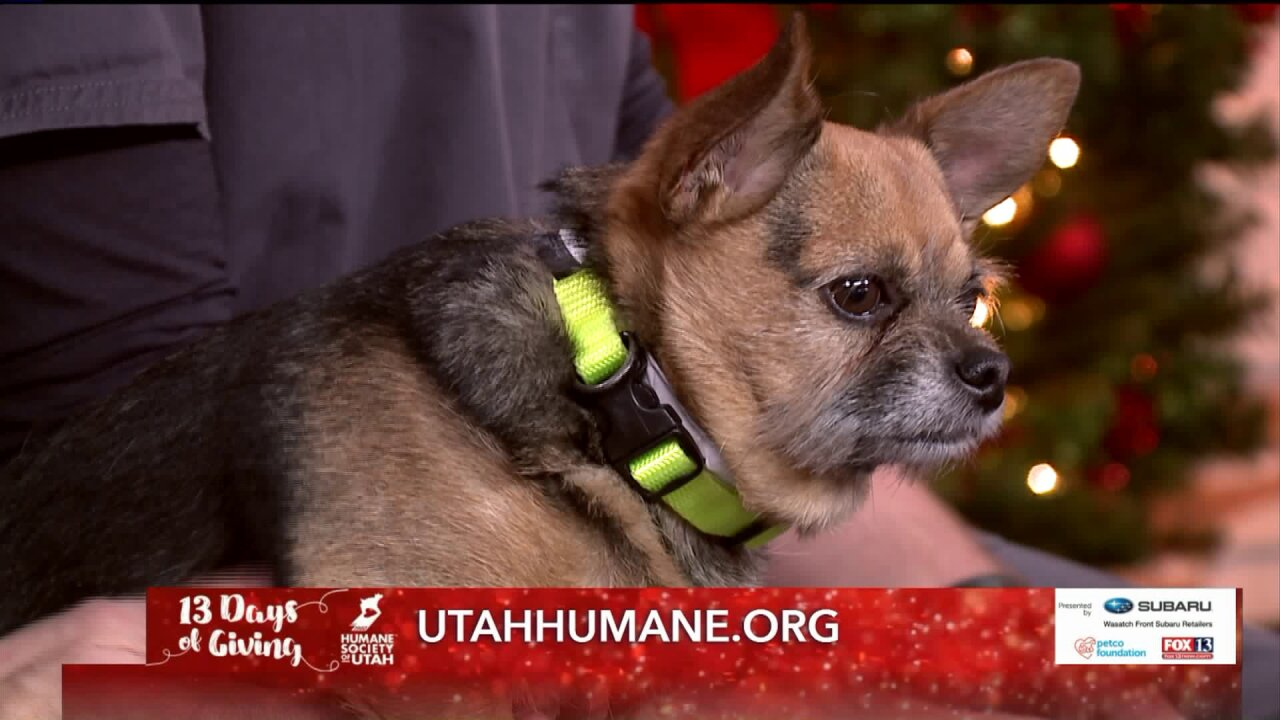 13 Days of Giving with Mountain West Veterinary Specialists
