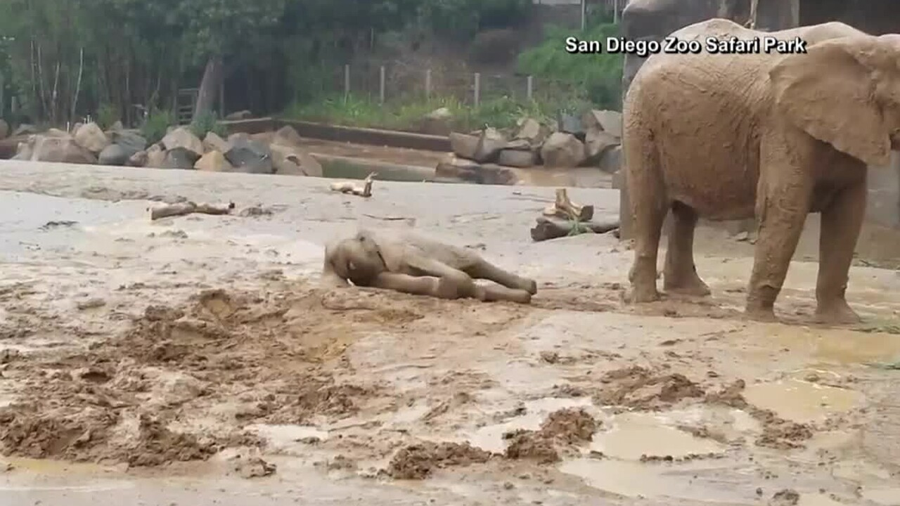 wptv-elephants-mud.jpg