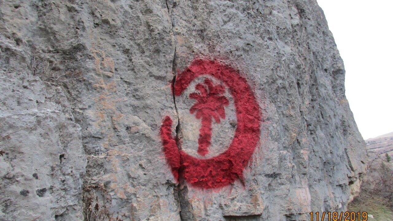 red palm tree close up_FWP.jpg