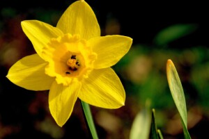 U.S. weather: Spring outlook 2016