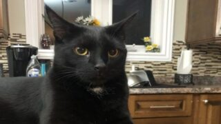 Cat Alerted Its Family Of A Burning Slow Cooker, Saving Them From A House Fire