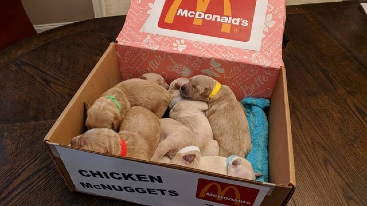 PUPPY COSTUMES! Dogs dressed as McD's nuggets