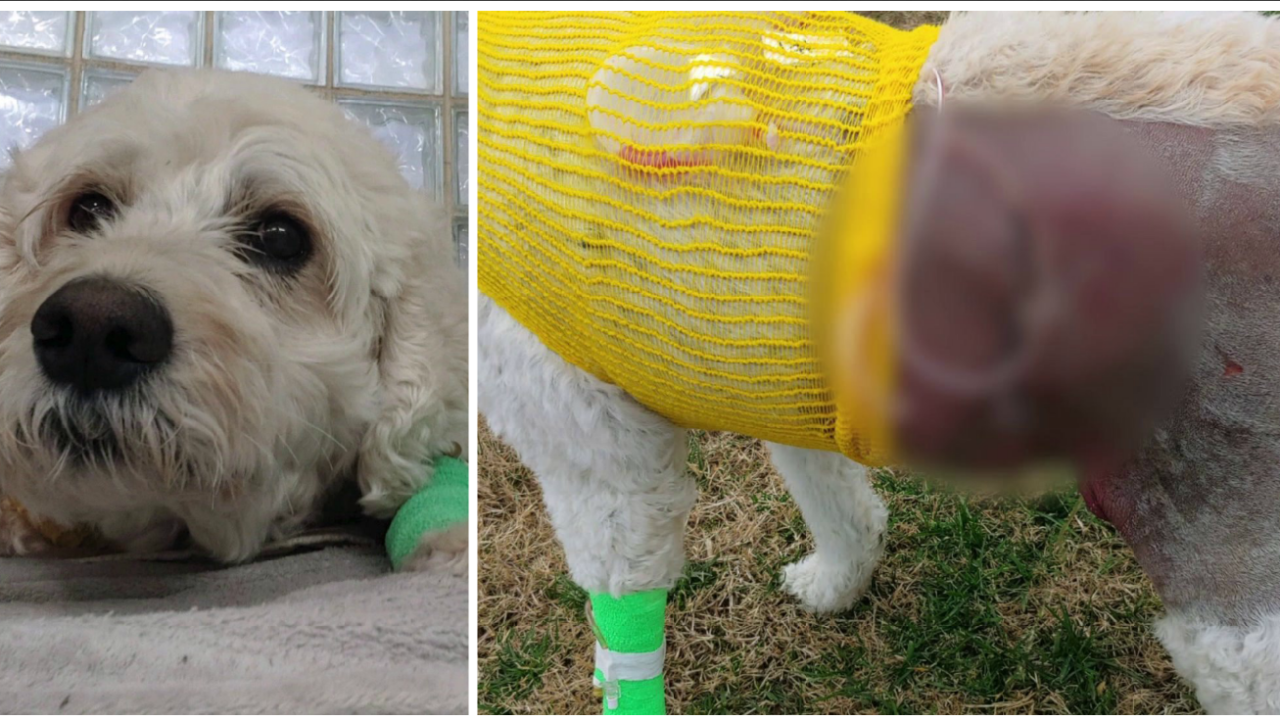 Mechanicsville man and dog recovering after pit bullattack