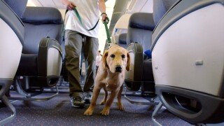 Student Guide Dogs Take Tour Of Newark Liberty Airport