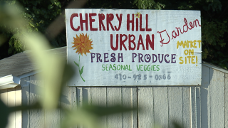 Baltimore Housing Authority agrees to let community garden stay in Cherry Hill until the end of year