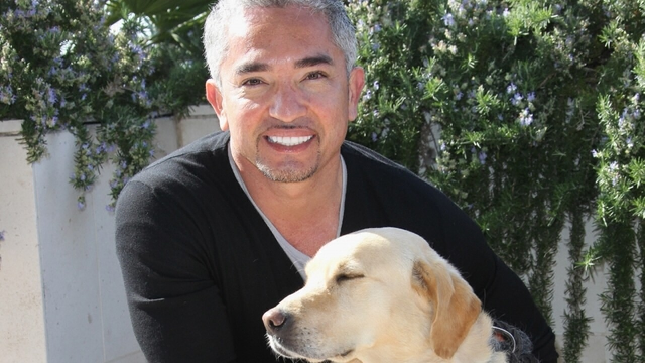 No charges against 'Dog Whisperer' Cesar Milan