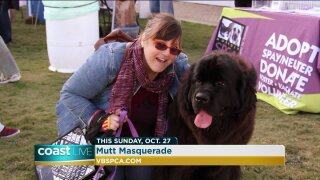 Training tips for dog owners on CoastLive