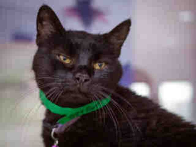 Adoptable pets from Maricopa County Animal Care and Control (7/13)