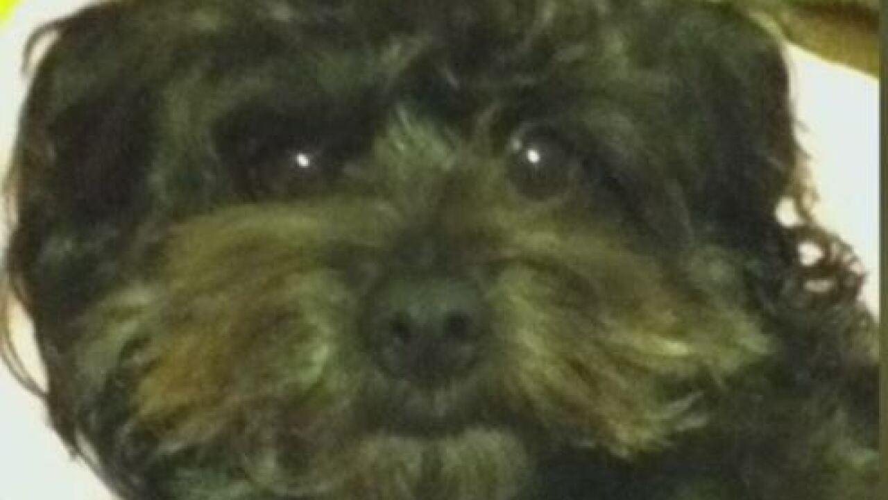 Dog dies at pet care facility