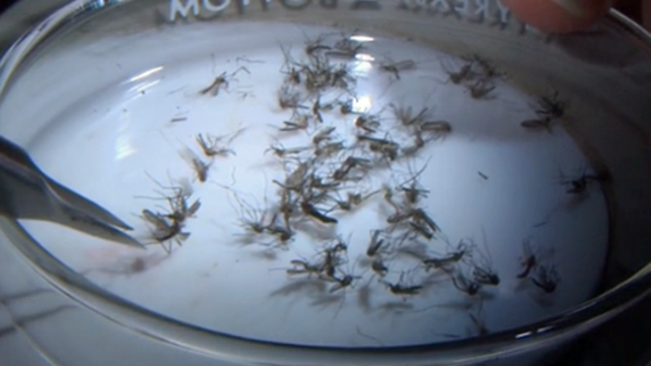 West Nile Virus detected on Treasure Coast