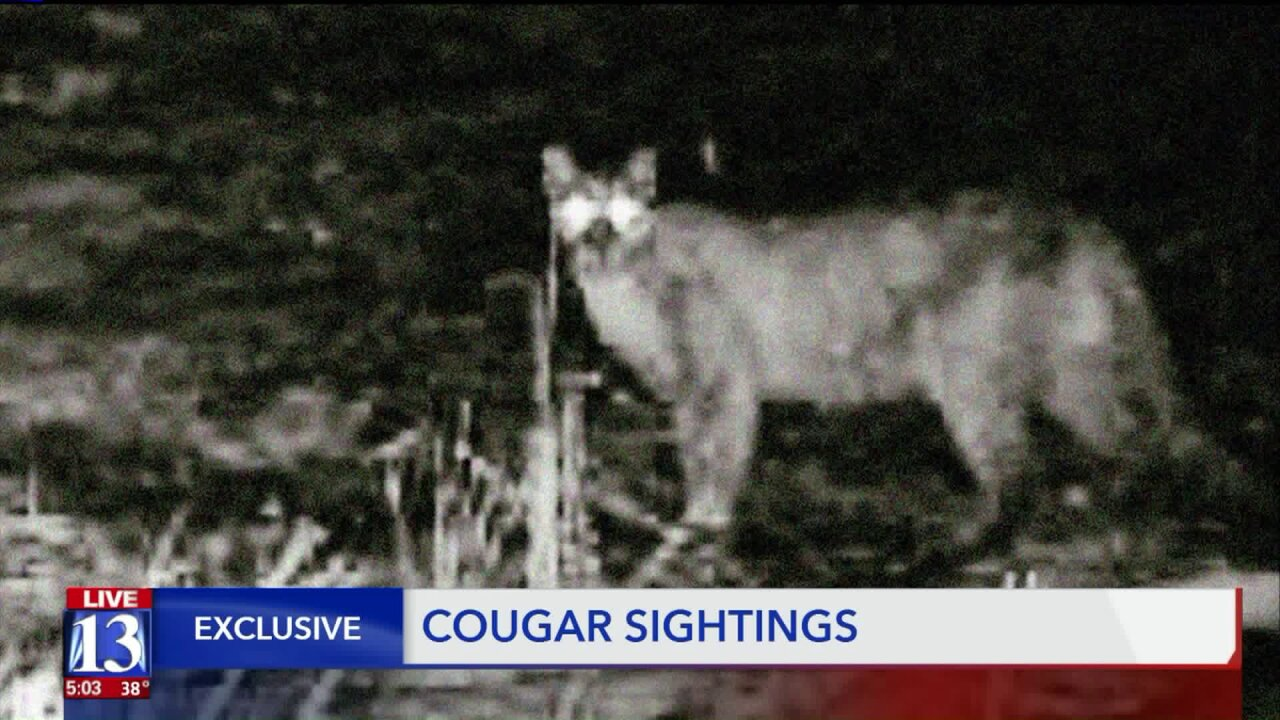 Several cougar sightings near Farmington trail causeconcern