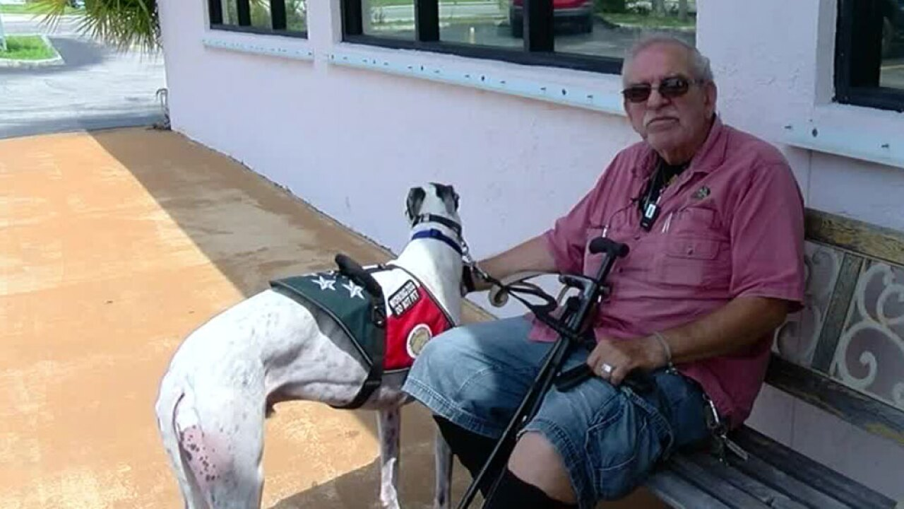wptv-hounds-of-heroes-.jpg