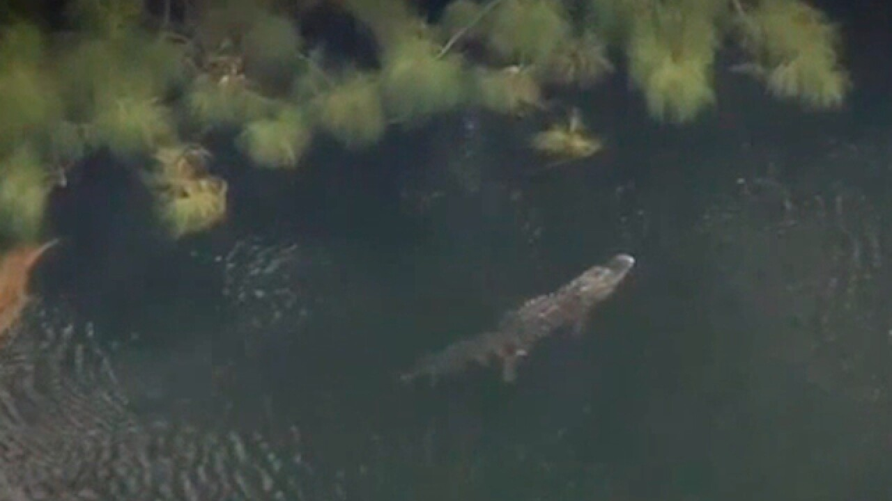 HOA issued gator warning before attack