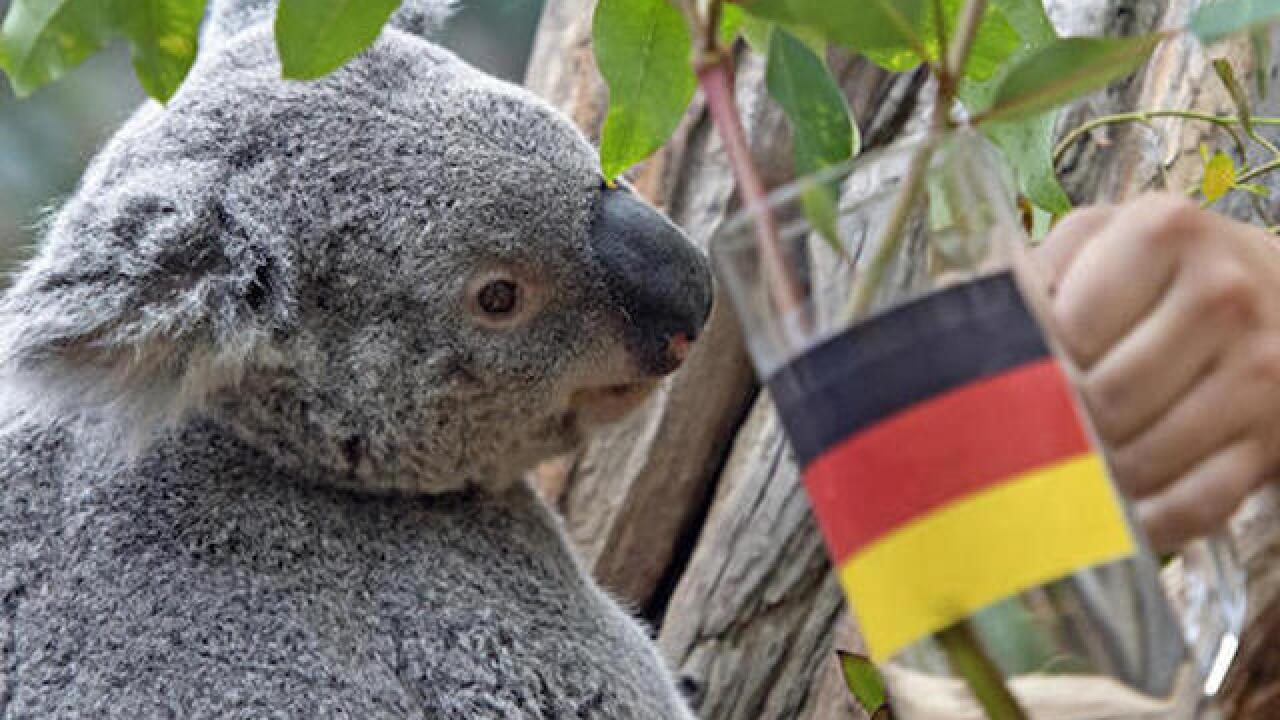 Animals in Germany predict Euro 2016 match