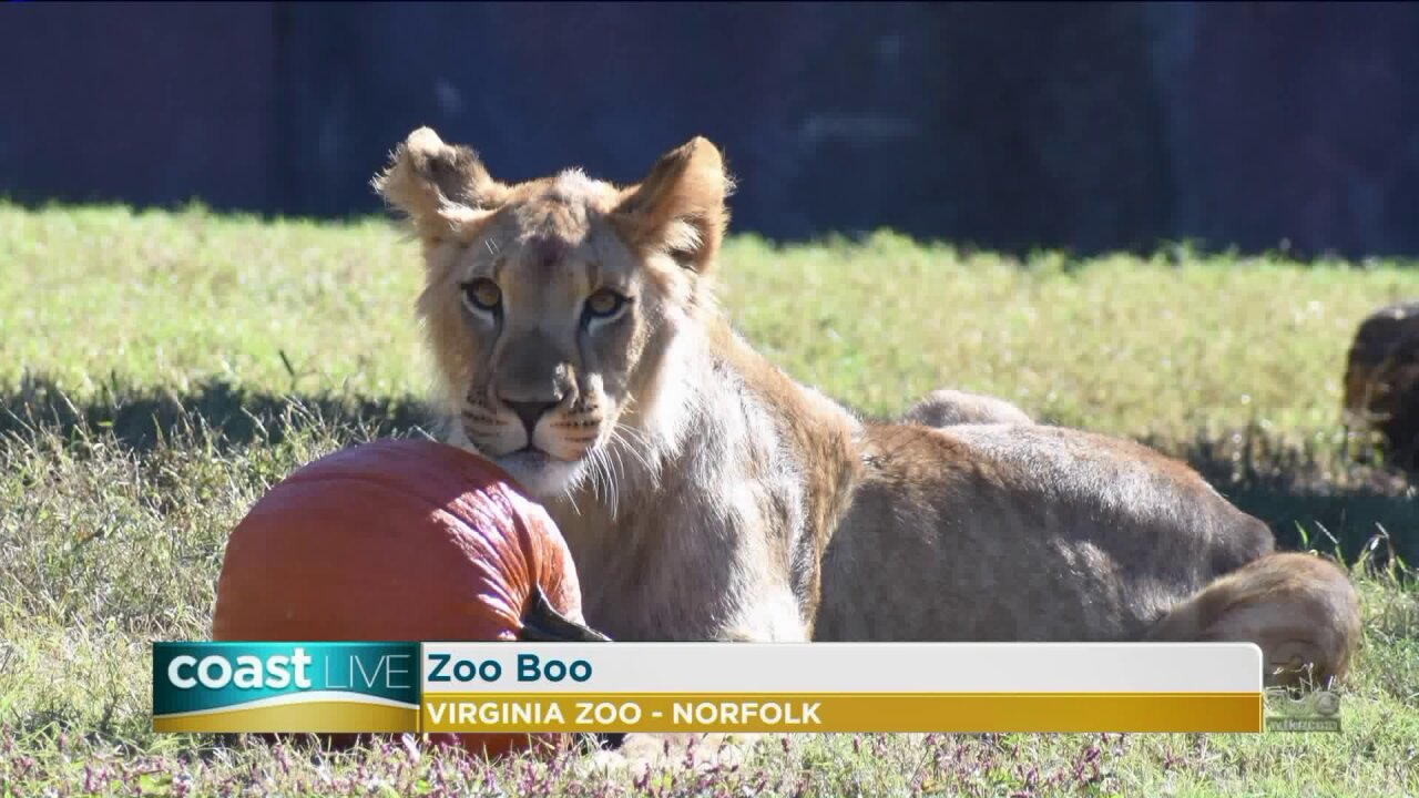 Getting ready for the Virginia Zoo Boo with two animals in disguise on Coast Live