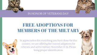 Veterans Day Special (4).png