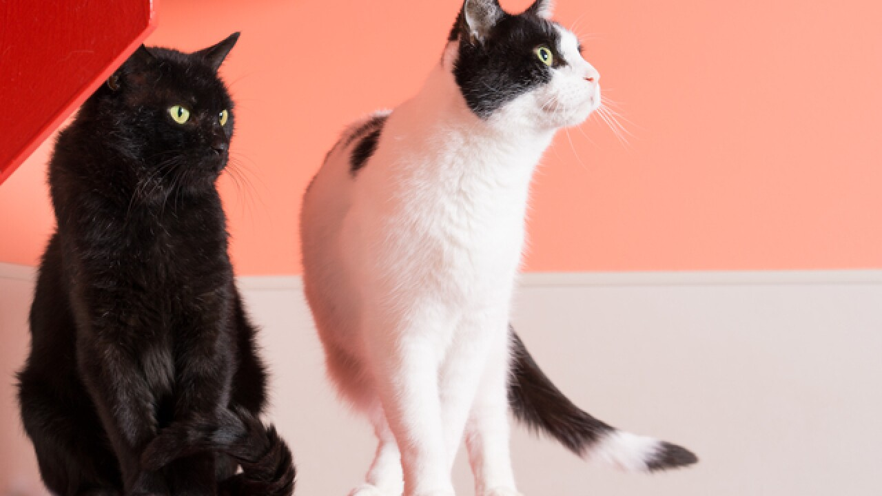 Calling all cat lovers: Sip & Purr, Milwaukee's first cat cafe, is hiring