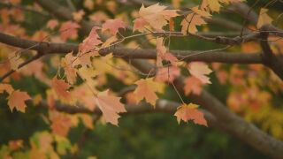 Be ready for mental health challenges that come with changing seasons
