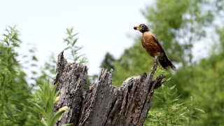 Scientists are stumped by the mystery illness affecting wild birds, which was first found among birds in Washington, D.C., Maryland and Virginia, before it spread to West Virginia, New Jersey, Pennsylvania, Ohio, Indiana, Tennessee, Kentucky and Florida.