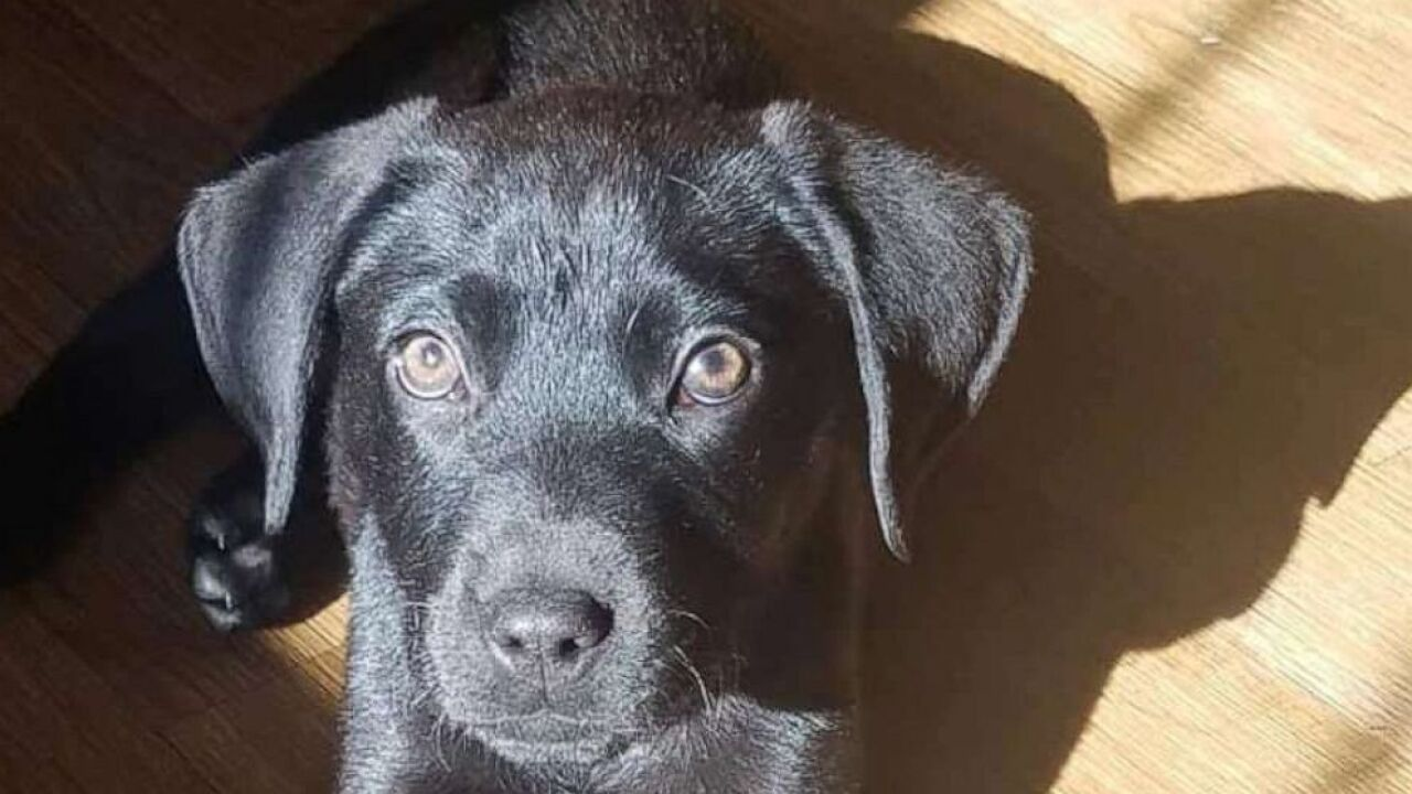 deaf man adopts deaf rescue puppy and teaches him sign