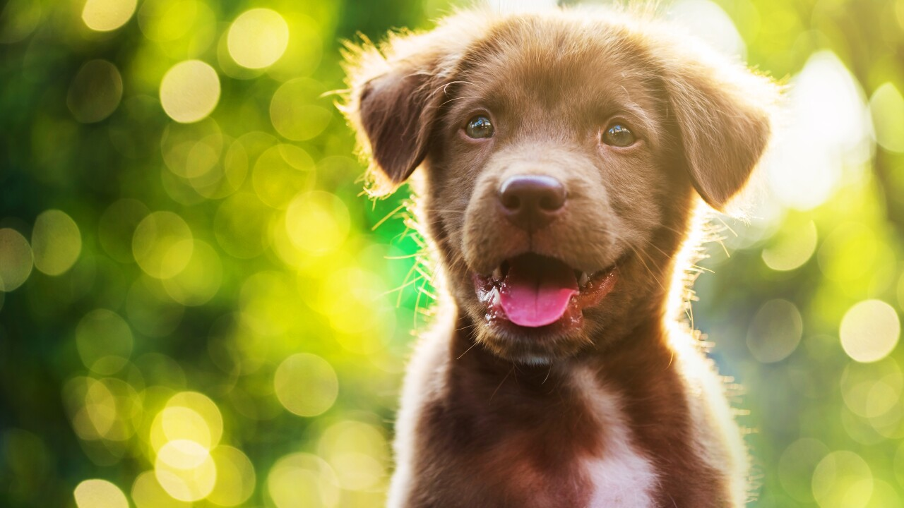Norfolk SPCA offering discounted spay/neuter services booked in May