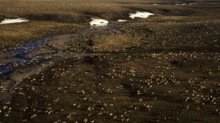 Artic Refuge Drilling
