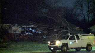 Tree on house Barberton.jpg