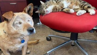 Blind Dog And His Support Cat Adopted Into New Family Together