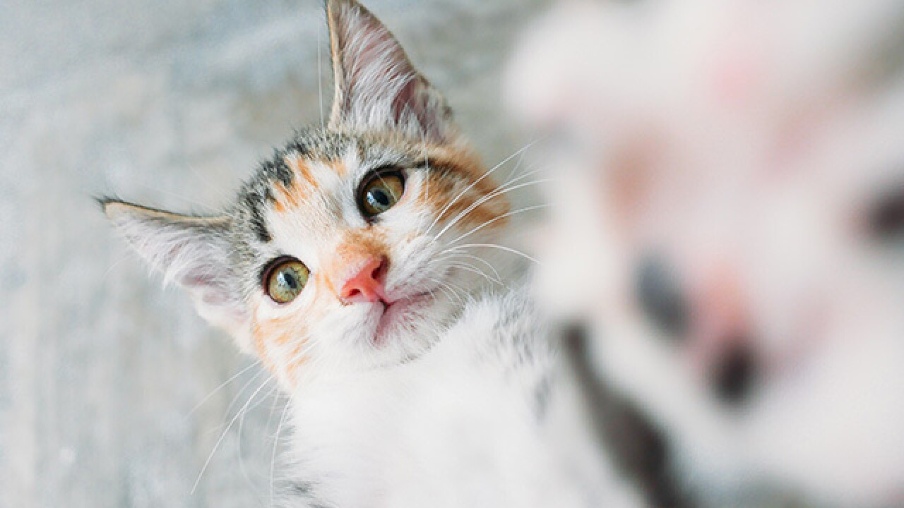Cleveland APL lowers adoption fees to $5 for cats, $10 for kittens over Labor Day Weekend